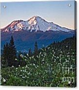 Mt. Shasta At Dawn Acrylic Print