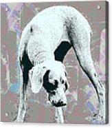 Mud Acrylic Print by Fran Hogan