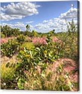 Muhly Grass And Sea Grape Plants Along A Florida Coastline Acrylic Print