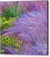 Muhly Grass In The Morning Acrylic Print
