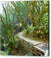 Curve In The Dipsea Acrylic Print