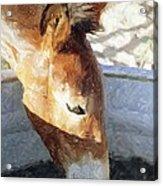 Mule A Cool Drink Acrylic Print