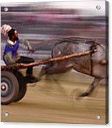 Mule Cart Race Acrylic Print