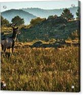 Mule Deer At De Weese Reservoir Acrylic Print