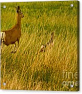 Mule Deer Doe And Fawn-signed-#0365 Acrylic Print