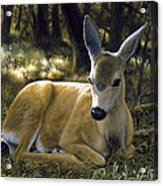 Mule Deer Fawn - A Quiet Place Acrylic Print by Crista Forest