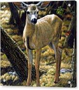 Mule Deer Fawn - Monarch Moment Acrylic Print