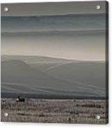 Mule Deer On The Prairies With Fog Acrylic Print