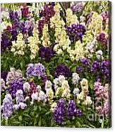 Multi-colored Blooms Acrylic Print
