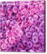 Mums In Purple - Featured In 'comfortable Art' And 'nature Photography' Groups Acrylic Print