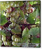 Muscadine Grapes Acrylic Print