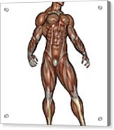 Muscular Man Standing Acrylic Print