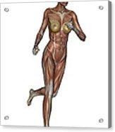 Muscular Woman Running Acrylic Print