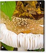 Mushroom Abstract # 2 Acrylic Print