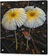 Mushroom Flowers Acrylic Print