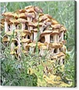Mushroom Gold Acrylic Print