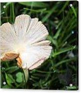 Mushroom Growing Wild On Lawn Acrylic Print