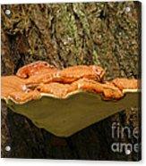 Mushroom Plate Acrylic Print
