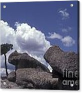 Mushroom Rocks Copper Canyon Mexico Acrylic Print