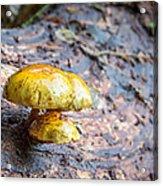 Mushroom Time Acrylic Print