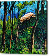 Mushrooming At Treaty Rock Acrylic Print by Charlie Spear