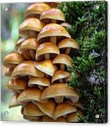 Mushrooms 2 Acrylic Print