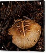 Mushrooms And Pine Combs   #3659 Acrylic Print