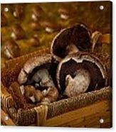 Mushrooms In A Basket Acrylic Print