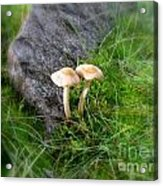 Mushrooms In Grass Acrylic Print