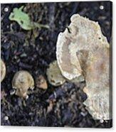 Mushy Mushrooms Acrylic Print