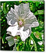 Musk Mallow Along Trail To Cap Gaspe In Forillon National Park-quebec  Acrylic Print