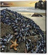 Mussel Beach Acrylic Print