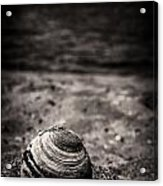 Mussel On The Beach Acrylic Print