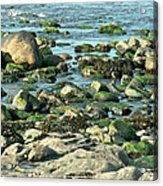 Mussels And Moss Acrylic Print
