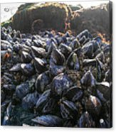 Mussels On A Rock Acrylic Print
