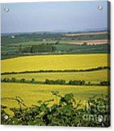 Mustard Colour Fields Acrylic Print