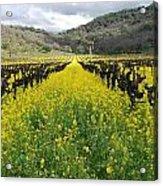 Mustard In The Vineyard Acrylic Print