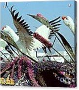 Mute Swans Rose Parade Float By Kodak Acrylic Print