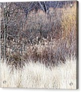 Muted Colors Of Winter Forest Acrylic Print