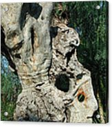 My Best Olive Tree Friend  Home Privat Spain Since 1999 Acrylic Print