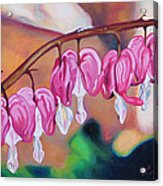 My Bleeding Hearts Out On A Limb Acrylic Print