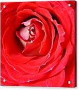 My Delicate Rose Acrylic Print