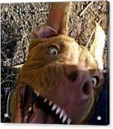 My Dog Smile Acrylic Print