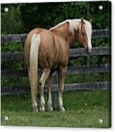 My Dream Horse Acrylic Print