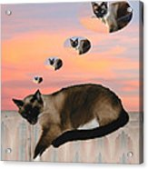 My Favorite Dream - Mouse Hunt Acrylic Print