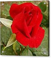My Favorite Rose Acrylic Print