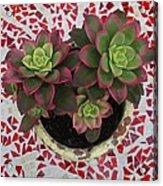 My Garden Series - Mosaica Acrylic Print