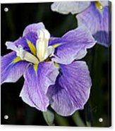 My Iris II Acrylic Print