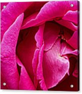 My Last Rose Acrylic Print by Kenneth Feliciano