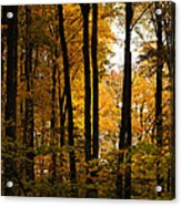 My Love For October Acrylic Print